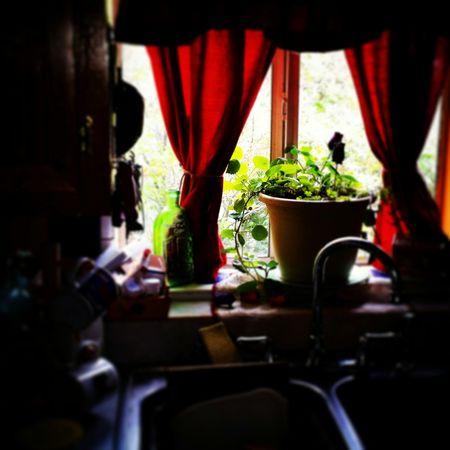 Kitchen, red,green, window,summer,