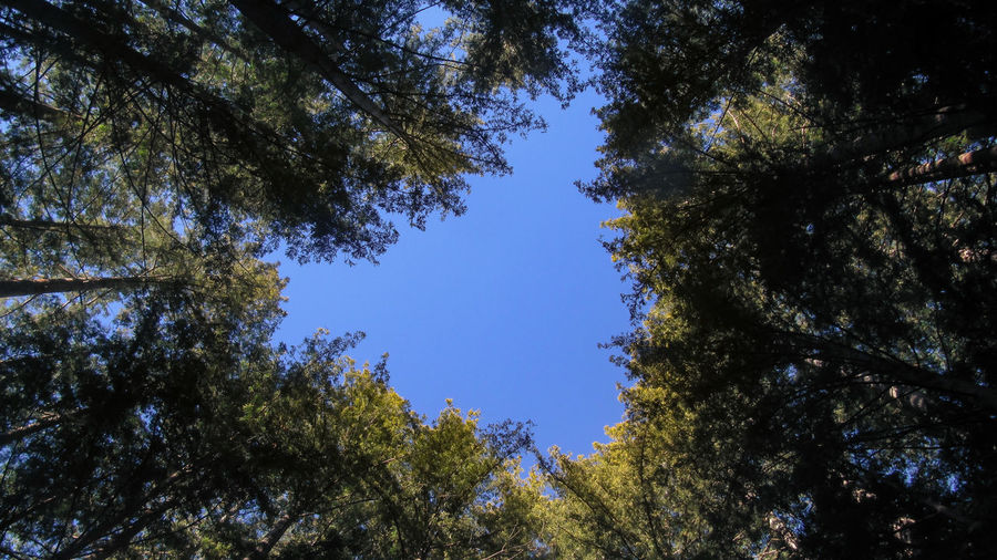Beauty In Nature Blue Sky Branch Day Forest Growth Low Angle View Nature No People Outdoors Santa Claus Sky Tree