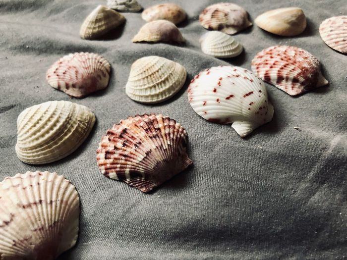 Florida seashells EyeEm Selects Shell Seashell Animal Shell Beach Animal Wildlife No People Still Life Close-up High Angle View Group Of Objects Pattern Nature Day Choice