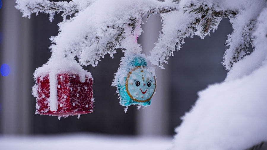 Close-up of snow covered decoration