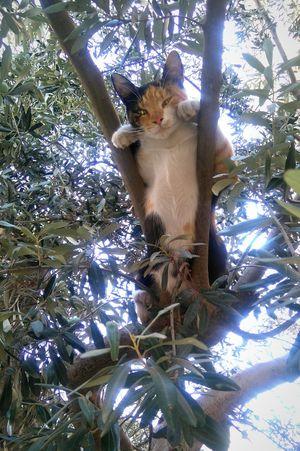 Cat Cats Of EyeEm Kitty Cat Lovers Hot Summer Hi Oh Hi There  Sleepy Tree Naturelovers Lazy Day Hello World Catoftheday Sun Beauty In Nature