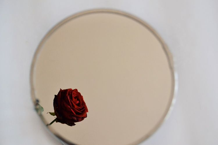 Mirror Mirror Reflection Reflection White Background Red Directly Above Close-up Rose - Flower Rose Petals Petal Flower Head Blooming