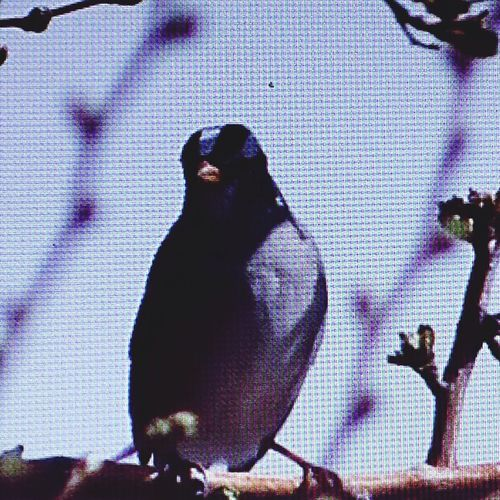 Camera to cumputer to phone to EyeEm to you! ;-)). EyeEm Birds Streamzoofamily StreamzooVille Streamzoo