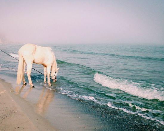 Лошадь,море,туман....Horse, sea, fog ... Popular Photos EyeEm Best Shots - Landscape Water Reflections Water_collection Melancholic Landscapes Melancholy Horse EyeEm Nature Lover Color Portrait