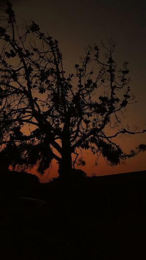 Notes From The Underground Sunsets Of Eyeem Sunset_collection Sunset Silhouettes Sunset Lovers Sunset Silhouette Sunset Sunset_captures Sun_collection Tree Sky Enjoying LifeSunsets
