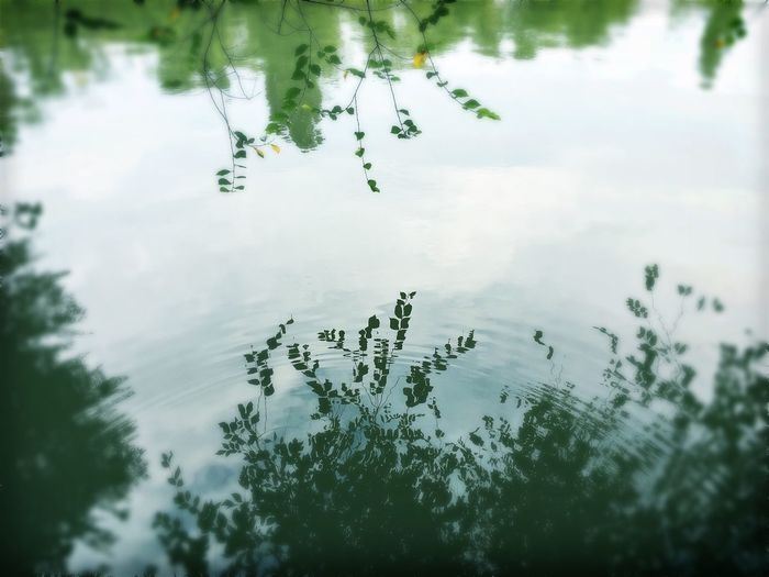 Reflection of trees in water