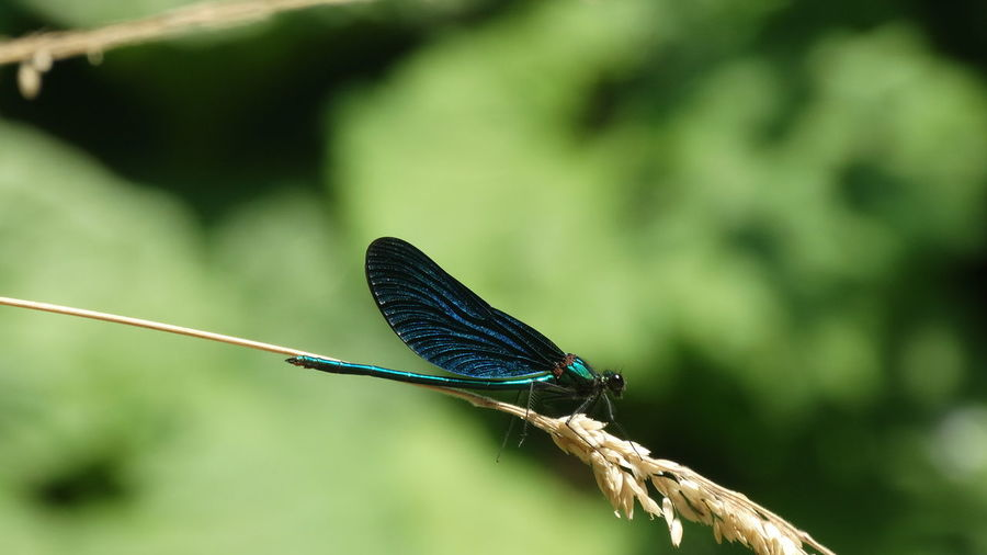 Dragonfly Gently Animals In The Wild Beauty In Nature Insect Insects Collection Nature Wildlife First Eyeem Photo
