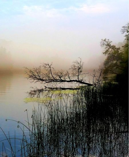 """"""" MisTerious """" * * * Blade Of Grass River Mist Rising Beautifull River Scene Beauty In Nature Lake Outdoors Reflection River Fog Scenics - Nature Tranquil Scene Tranquility Tree Water"""
