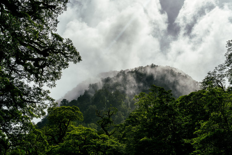 Beauty In Nature Cloud - Sky Day Freshness Landscape Low Angle View Mountain Nature No People Outdoors Scenics Sky Tree
