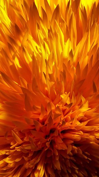 The flames of heart... Simplicity Petals Light And Shadow Flower Head Tenderness And Warmth... Close-up Beauty In Nature Vibrant Color Plant Orange Color Contrast Love