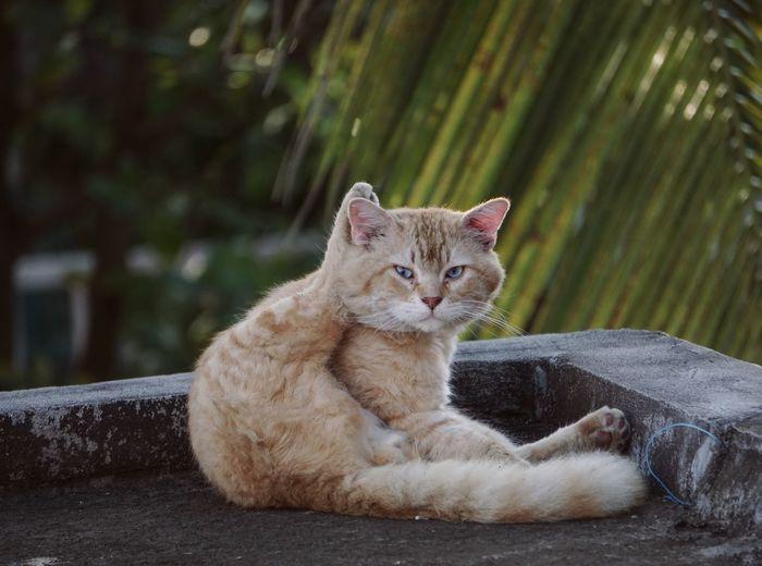 Veracruz Mexico Gatos Cats Of EyeEm Cat Feline Mammal Animal Animal Themes Domestic Pets