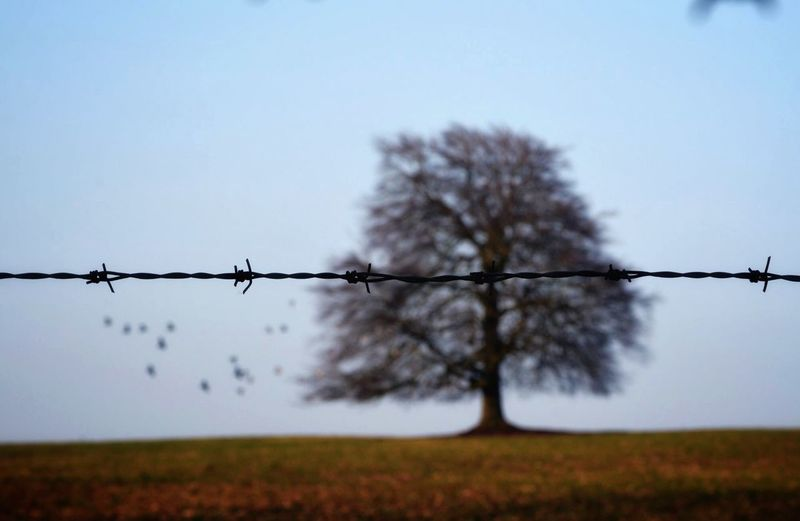 Barbed Autumn Barbed Wire Protection Field Safety Day Outdoors No People Nature Landscape Sky Clear Sky Tree Beauty In Nature