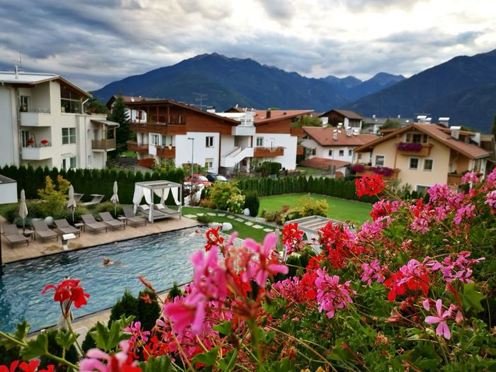 Pink flowering plants by houses and mountains against sky