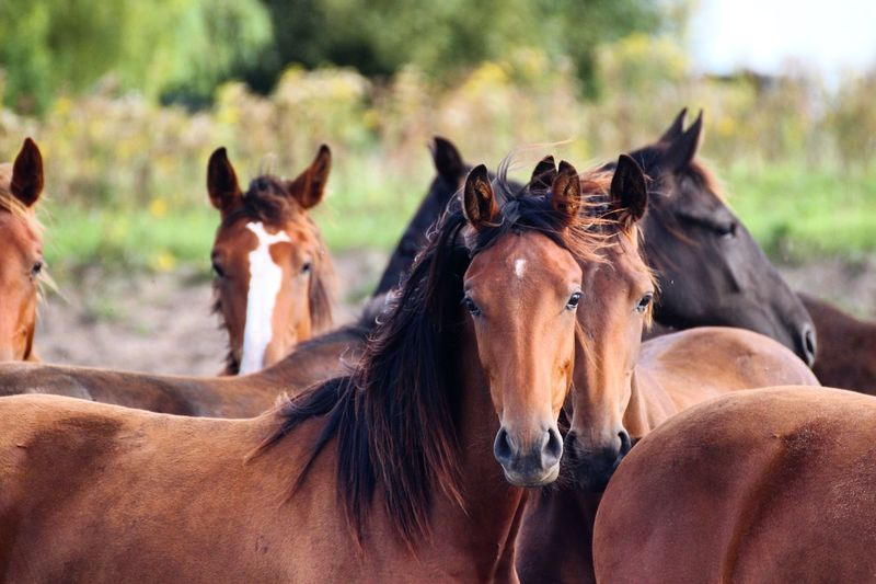 Beautiful horses in Holland. Horses Nature Photography Canonphotography First Eyeem Photo