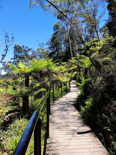 Walkway amidst trees against clear sky