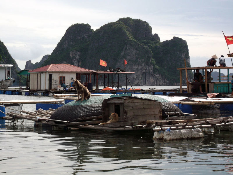 Fun Funny Halong Bay Vietnam Halongbay Houses Architecture Beauty In Nature Day Dog Floating Floating House Floating Houses Floating On Water Ha Long Bay House Houseboat Mountain Nature Nautical Vessel Outdoors Real People Sea Sky Water Waterfront The Week On EyeEm Pet Portraits