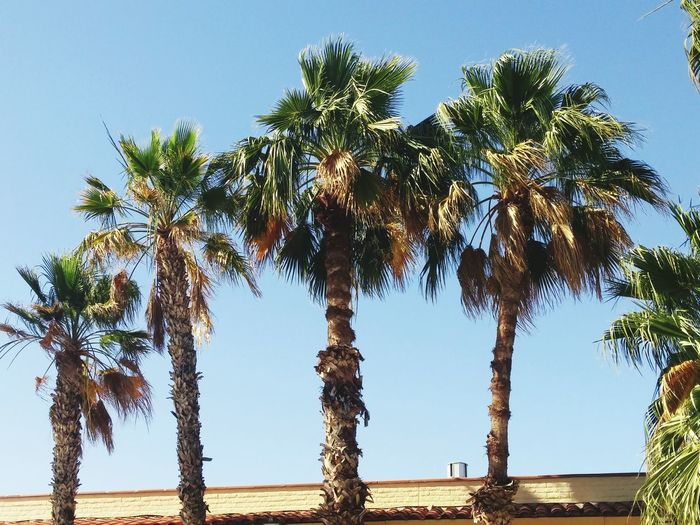 Palms Blue Sky Eyemphotography Green Green Green!  Shadows & Lights Sunlight Trees In A Row