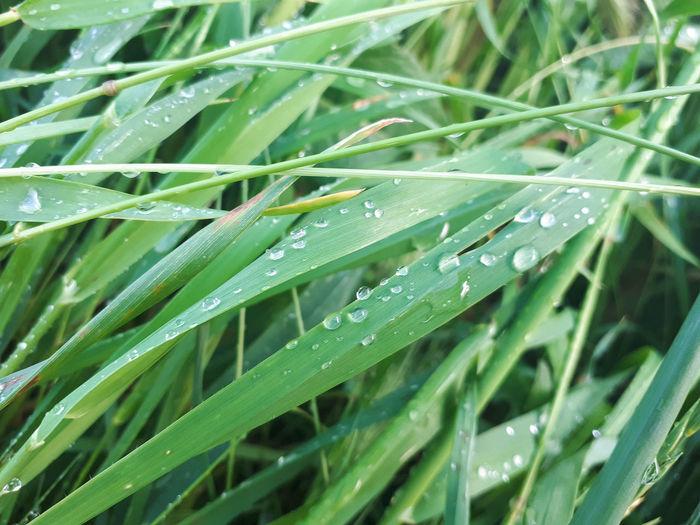Full frame shot of wet leaves on rainy day
