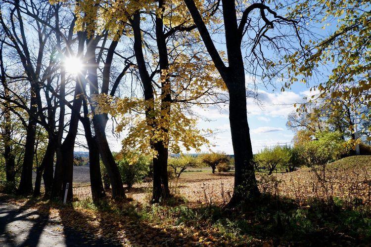 Sunlight streaming through trees on landscape against bright sun