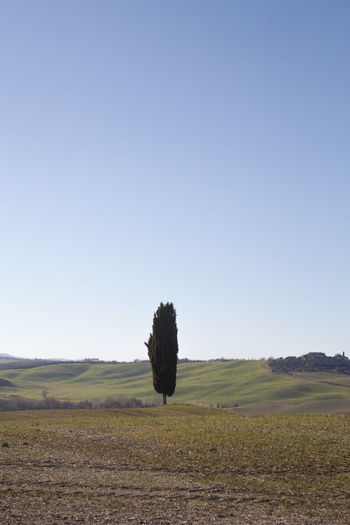 Sky Landscape Land Environment Field Nature Scenics - Nature Tranquil Scene Outdoors Tranquility Beauty In Nature Plant Clear Sky Copy Space Growth Tree Day No People Rural Scene Non-urban Scene Grass Crete Senesi Pienza Val D'orcia Tuscany Tuscany Hills Tuscany Countryside Cypresses Road