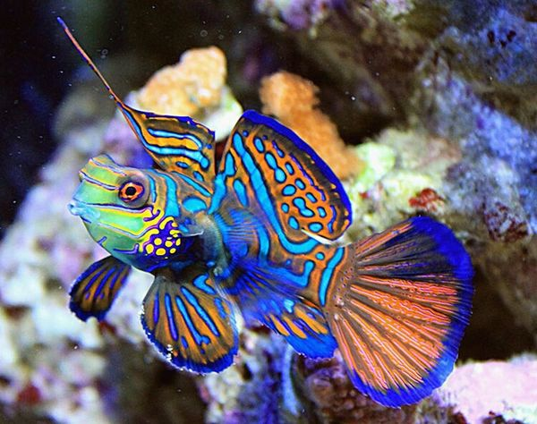 Underwater Animal Sea Life UnderSea One Animal Animal Wildlife Fish Multi Colored Swimming Sea Animals In The Wild Nature Animal Markings Animal Themes Animal Fin No People Pets Close-up Beauty In Nature Outdoors