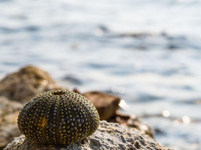 Close-up of sea urchin on rock at seashore
