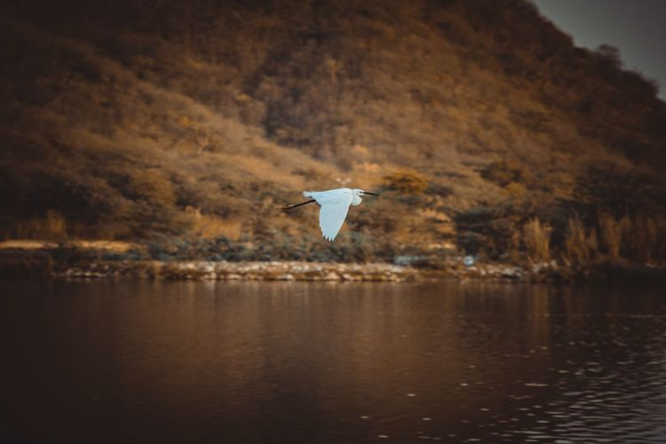 Bird flying over a lake