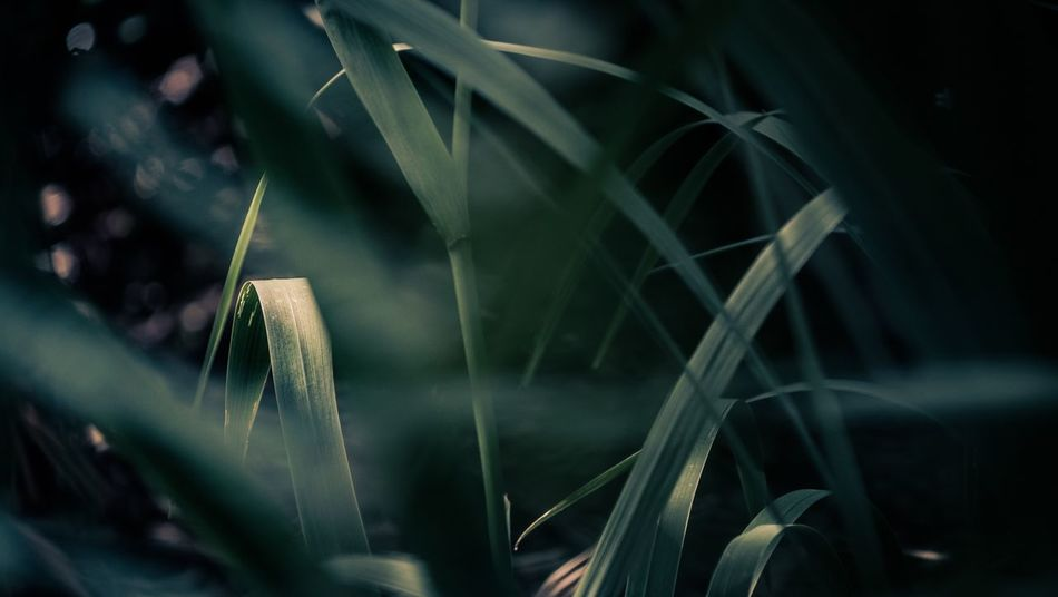 Growth Plant Nature No People Close-up Leaf Beauty In Nature Outdoors Day Freshness Fuji-xe2s Tenebrio.photos Yashica Ml 100mm