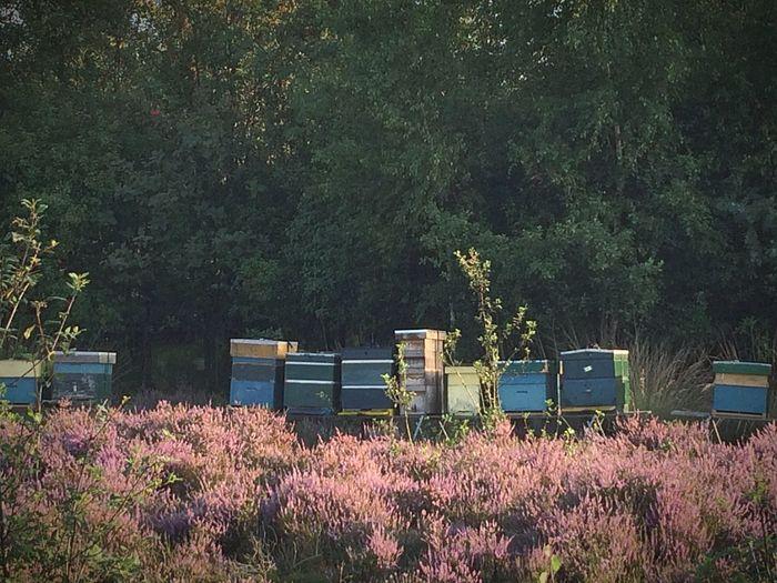Bee Hive Bee Hive Honey Heather Bees Honey Bees  Eyemphotography EyeEm Nature Lover Nature On Your Doorstep