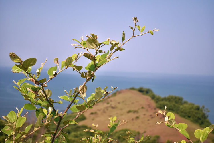 Close-up of flowering plant against sea