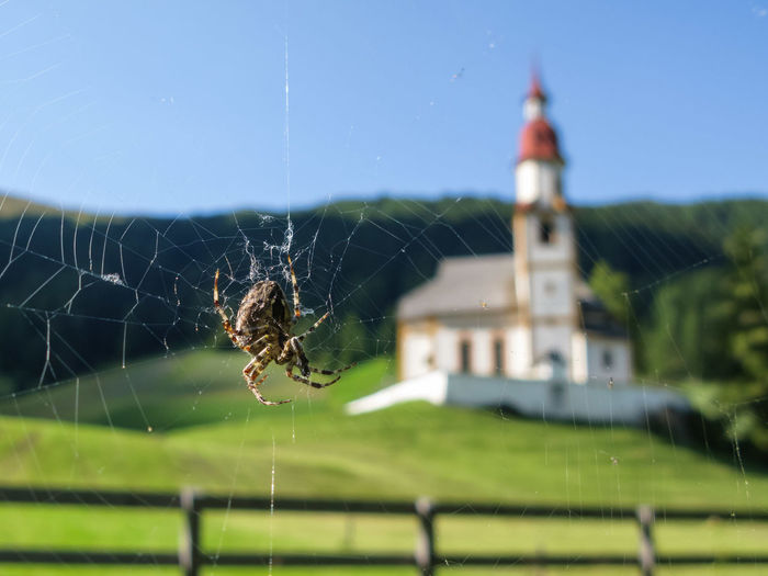 spider and church Church Spider Animal Themes Close-up Focus On Foreground Interpretations Nature No People One Animal Outdoors Spider Web