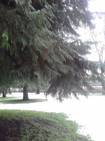 Nature Tree No People Green Color Scenics Tranquil Scene Beauty In Nature Grass Winter Time Snow