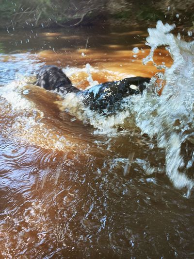New Forest, Hampshire. UK Forest Photography Streams Water Jumping Splash Splashing Dogs Life Dogs Of EyeEm Fetch Dog Walk Family Time Godshill Hampshire Capturing Motion