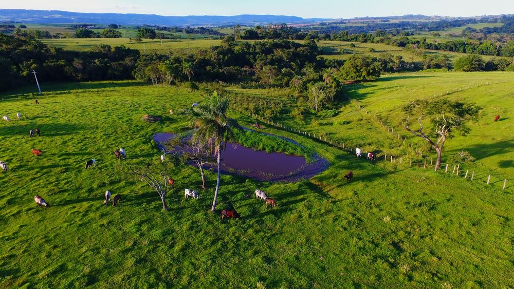 Entardecer no campo Drone  Rural Dronephotography Sky Aerial View Aerial Shot Aerial Photography Clouds And Sky Cows Cow River Lagoon Sun Paradise Field Agriculture Green Color Landscape Farm Grass Nature Beauty In Nature Outdoors Scenics Rural Scene