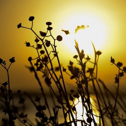 Good morning! x EyeEm Best Shots EyeEm Best Shots - Sunsets + Sunrise EyeEm Best Shots - Landscape EyeEm Nature Lover