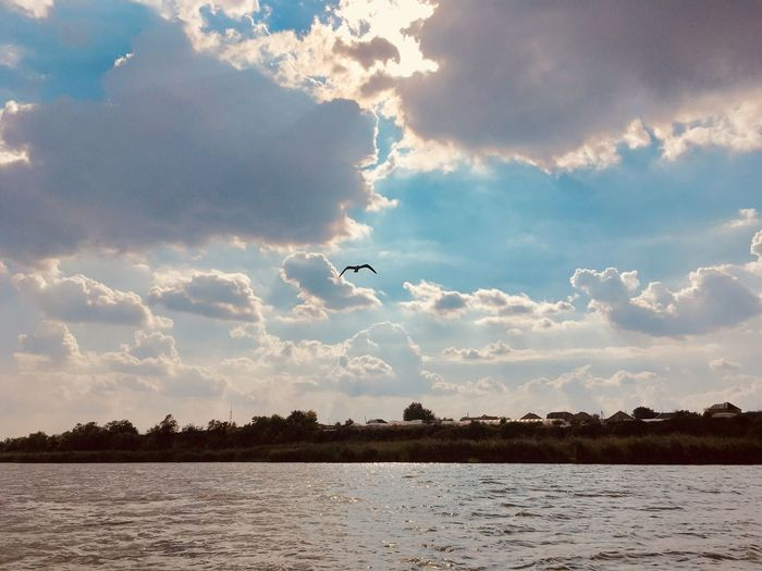 Sky Cloud - Sky Flying Water Vertebrate Animals In The Wild Bird Scenics - Nature Animal Wildlife Beauty In Nature Animal Themes Nature Animal Tree Tranquility No People Waterfront One Animal Tranquil Scene