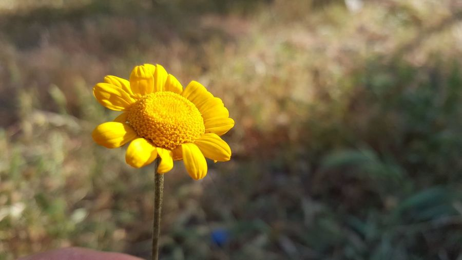 Galaxy s6 camera no effect Colorful Beauty Mauntain Sunnyday☀️ Nature Flowers Nice Picture 😉👌