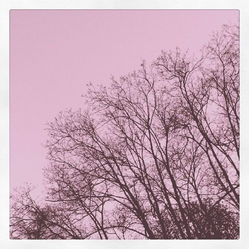 Dead branches Tree Forest Park Indiedentro wowocheoroginalelafotoairami parcovalentino