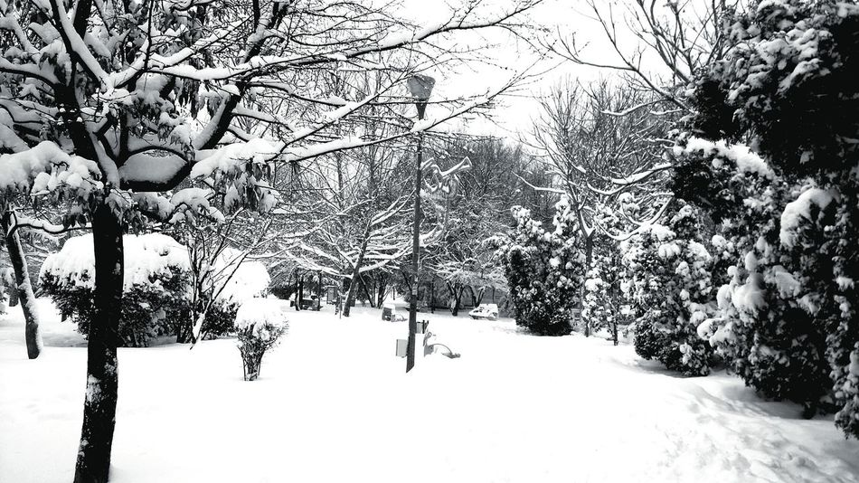 Bucharest In Snow Wintertime Park Snow ❄ Eyem Winter Black And White Photography My Point Of View Hello World ALL WHITE EVERYTHING Beauty In Nature Tranquil Scene Cold Weather Fun Cold Winter ❄⛄ Winter_collection