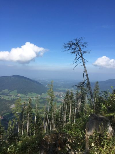 View from mountain Unternberg on the Bavarian landscape in Germany Nature Mountain Sky Cloud - Sky Tranquility Beauty In Nature Landscape No People Scenics Tranquil Scene Day Tree Outdoors Forest Growth Germany🇩🇪 Bavaria Bavarian Bavarian Alps Bavarian Landscape Unternberg Beauty In Nature