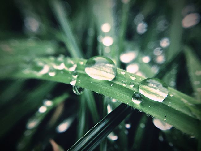 After The Rain Plant Drop Green Color Growth Close-up Leaf Plant Part Selective Focus Water Wet Beauty In Nature Freshness Focus On Foreground Fragility Vulnerability  Dew