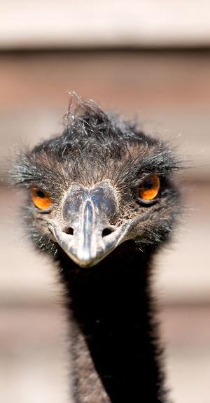 Extreme close-up portrait of bird