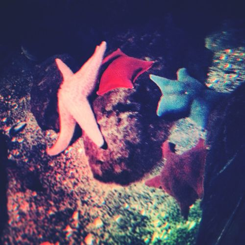 Twinkly little stars... Starfish  Sealife Colourful Be Amazing Showcase: February