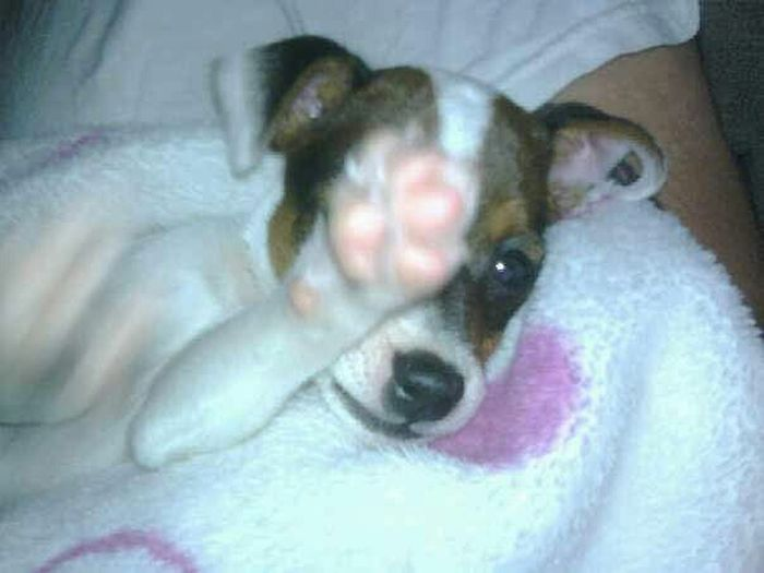 Cutest. Puppy. Pic. Ever. 💙🐶💙 Puppy Love Just Chilling Hi There! Cute Pets Mommasboy Love Littleman Socute Highfive PuppyLove