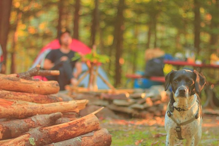 Mans best friend Dog Pup Camping Nature