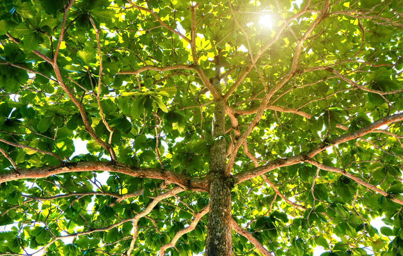 Low angle view of leaves on tree against bright sun