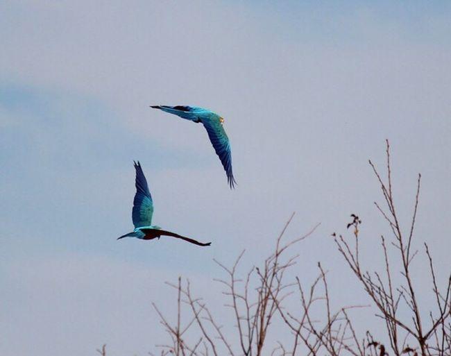 EyeEm Birds parrots