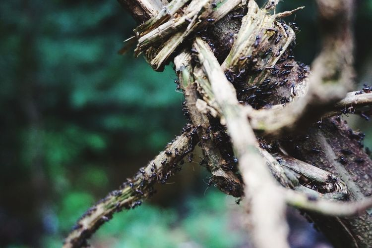 Ants Tree Pinaceae Pine Tree Spider Web Close-up Animal Themes Plant Cocoon Wilted Plant Wasp Dried Web Arachnid Needle - Plant Part Twig Dead Plant Thistle Animal Leg Butterfly - Insect Wilted Dried Plant