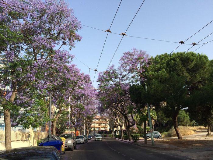 Stupende pennellate di viola pastello nell'aria! Spettacolo unico!