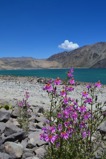 Embalse El Yeso Resistance  Beauty In Nature Blue Sky Blue Water Flower No People Rocks Tranquil Scene EyeEmNewHere
